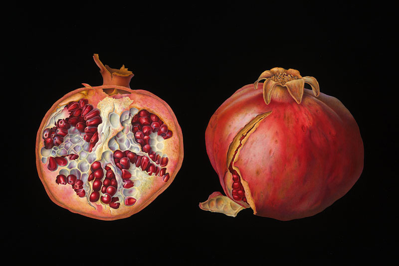 Susannah Blaxill - Pomegranates on black background